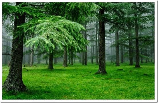amazon-forest-photo1