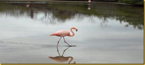 Foto Galapagos Fenicotteri Rosa