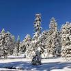 Winter Arnold Arboretum