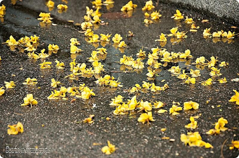 Yellow-flowers-(1)