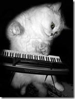 gato pianista blogdeimagenes (16)