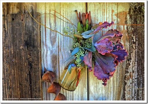 140926_SucculentExtravaganza_022