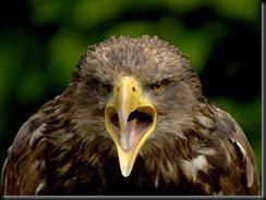 young-eagle-attitude_12596_600x450