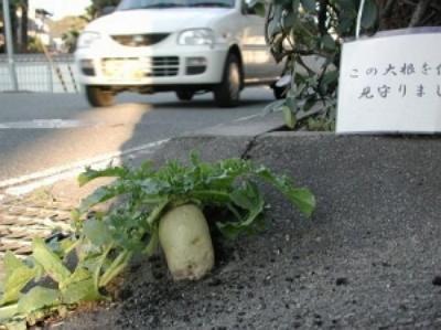 daikon-aioi.jpg