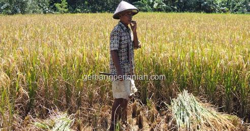 Summary Ada Apa Di Joglo Tani Gerbang Pertanian