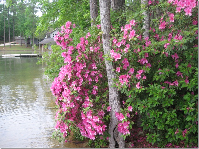 lake may 2010 025