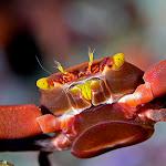Crab detail