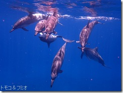 ハワイ島でイルカと泳ぐドルフィンスイム