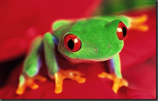 Green-Frog-2-frogs-1440x900