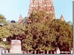 SueReno_Mahabodhi Temple 1