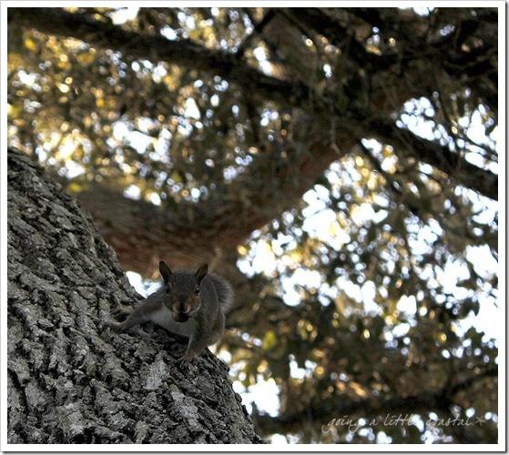 squirrel2 copy