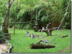 2011.07.26-001 lémuriens