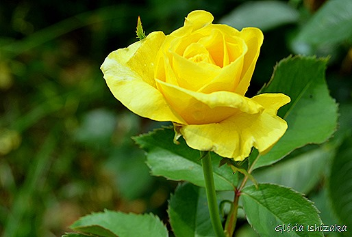 Glória Ishizaka - Flor amarela 20