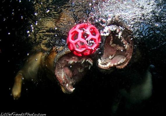under-water-dog
