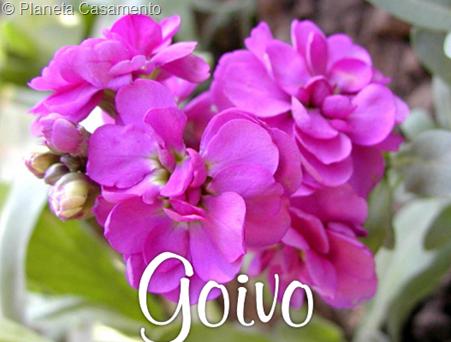GOIVO