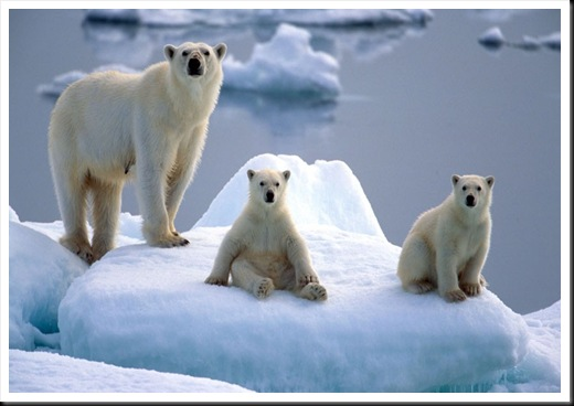 polar-bear-and-cub_2335860k
