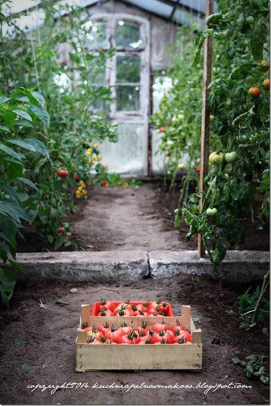 czarne pomidory (1)