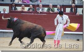 ©Dolores de Lara (59)