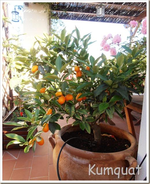 kumquat 5