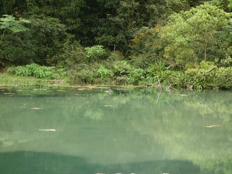2013_0415-0418 福山植物園-6_018