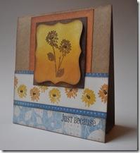 picasa card2-1