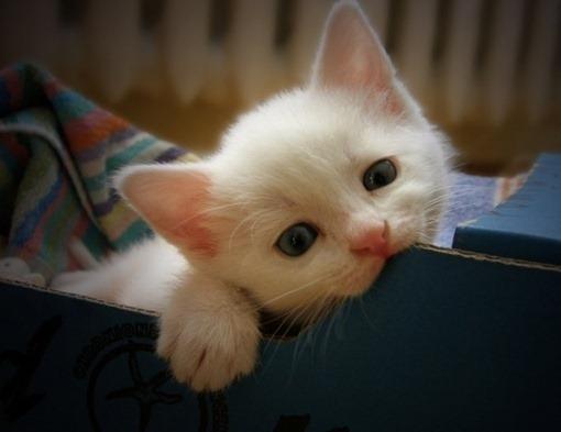 gatinho-branco2