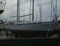 Sea Gal 017u