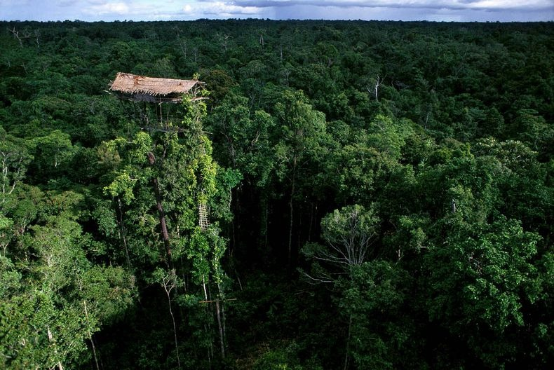 korowai-tree-house-0%25255B6%25255D - Do you want to live in a tree house? - Photos Unlimited