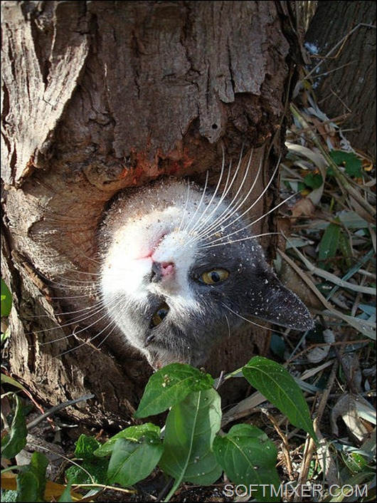 cat-stuck-inside-tree-hollow-01