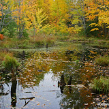 Fall Color And Reflections / Porcupine Mountains State Park / Upper Michigan