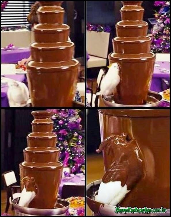 ELE ADORA CHOCOLATE!