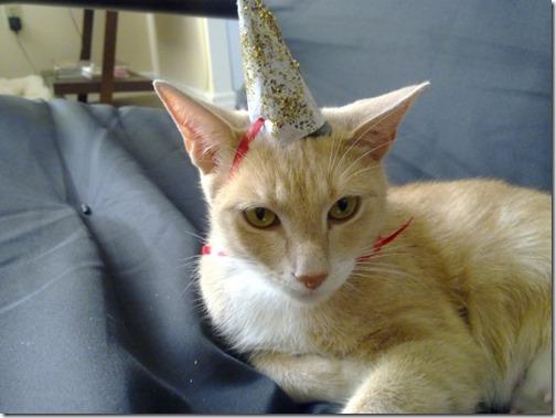 gatos disfrazados de unicornio (7)