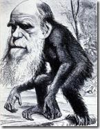 Darwin-macaco
