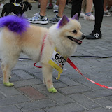 Pet Express Doggie Run 2012 Philippines. Jpg (275).JPG