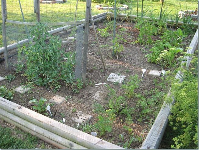 garden 05 (2)