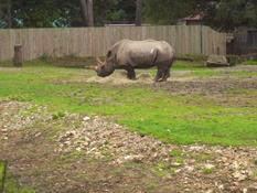 2013.10.26-011 rhinocéros