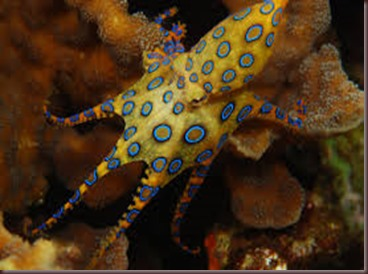 Amazing Pictures of Animals. Poison, Dangerous.4.Blue-Ringed Octopus.Alex