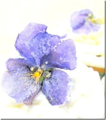 sugared viola