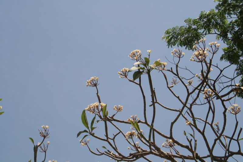 IMG_9135-Wallpapered Flower 1.5 rule.JPG