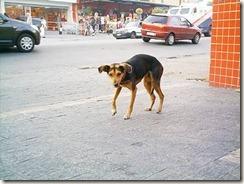 Dilma nas ruas depois de tudo...