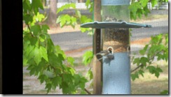 Birds-at-feeder-from-screen-porch