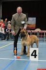 20130510-Bullmastiff-Worldcup-0317.jpg