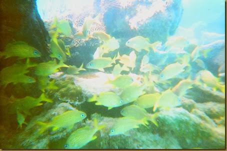 undersea photo with lots of yellow fish