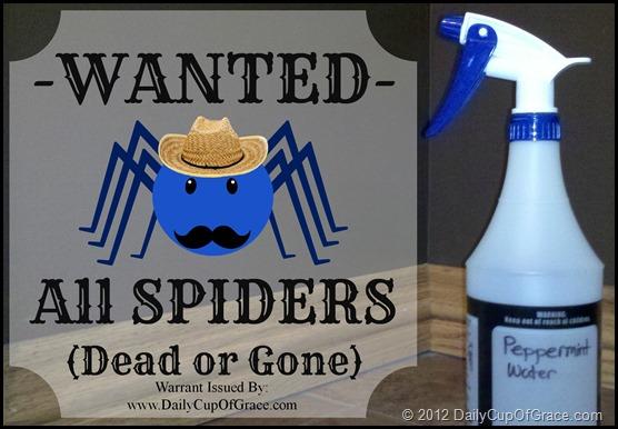 Spider Warrant