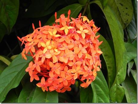 poze-desktop-flori