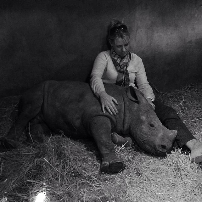 Poignant image of Adine Rhoode owner of Camp Jabulani near Hoedspruit, Limpopo South Africa with 'Gertjie' a rhino orphaned by poachers, 29 May 2014. Photo: Hoedspruit Endangered Species Centre