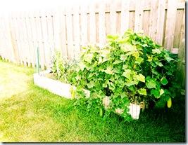 Garden August 18-3