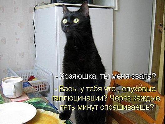 f6ecc6c957b91028a57ab61ed15_prev