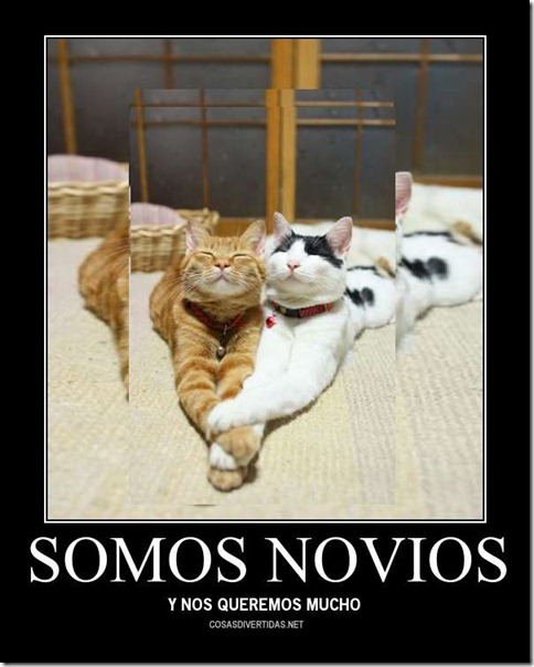 GATOS NOVIOS 1