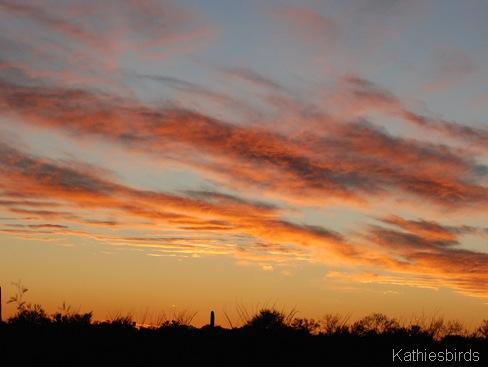 21. saguaro np-kab